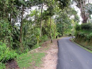 Penang Hill walking trail