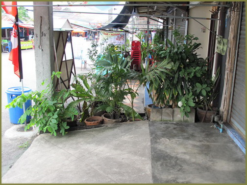 Sidewalk in Thailand blocked with plants